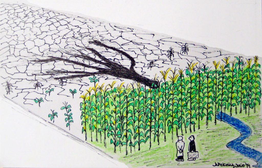 Admirando la cosecha transgénica' por Juanchila, julio de 2014